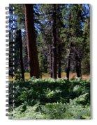 Bluff Lake Ca Fern Forest 4 Spiral Notebook