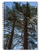 Bluff Lake Ca Through The Trees 3 Spiral Notebook