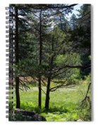 Bluff Lake Ca Through The Trees 8 Spiral Notebook