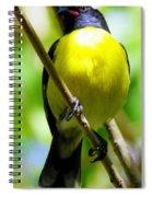 Boastful Bird Spiral Notebook