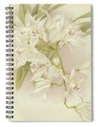 Boat Orchid  Cymbidium Spiral Notebook