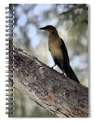 Boat - Tailed Grackle  Spiral Notebook