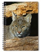 Bobcat Hiding In A Log Spiral Notebook