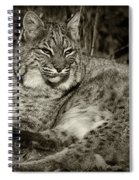 Bobcat In Black And White Spiral Notebook