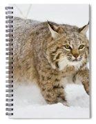 Bobcat In Snow Spiral Notebook