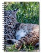 Bobcat In The Grass 2 Spiral Notebook