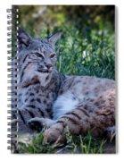 Bobcat In The Grass Spiral Notebook