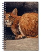 Bobcat On Ledge Spiral Notebook