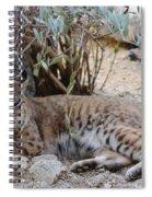 Bobcat Resting Spiral Notebook