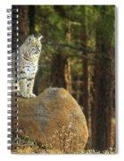 Bobcat Thoughts Spiral Notebook