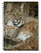 Bobcat Warming In The Autumn Sun Spiral Notebook