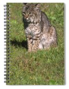 Bobcat - Wildcat Beach Spiral Notebook