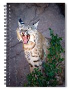 Bobcat Yawn Spiral Notebook