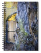 Boboli Garden Ancient Tree Spiral Notebook