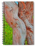 Bodies And Muscles Spiral Notebook