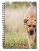 Boerboel Dog Spiral Notebook