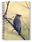 Bohemian Cedar Waxwing In Spring Spiral Notebook