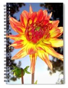 Bold And Beautiful Spiral Notebook