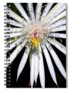 Bold Cactus Flower Spiral Notebook