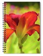 Bold Red Gold - Daylily Spiral Notebook