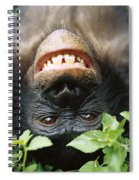 Bonobo Smiling Spiral Notebook
