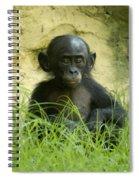 Bonobo Tyke Spiral Notebook