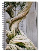 Bonsai Spiral Notebook