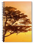 Bonsai Pine Sunrise Spiral Notebook
