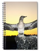 Booby At Sunset Spiral Notebook