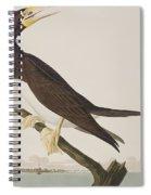 Booby Gannet   Spiral Notebook