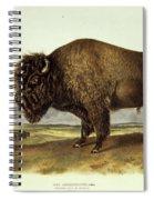 Bos Americanus, American Bison Spiral Notebook