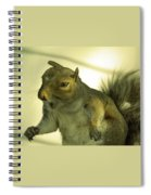 Bossy Squirrel Spiral Notebook