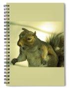 Bossy Squirrel Spiral Notebook