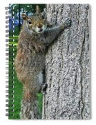 Boston Common Squirrel Hanging From A Tree Boston Ma Spiral Notebook