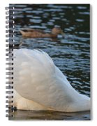 Boston Public Garden Swan Amongst The Ducks Ruffled Feathers Spiral Notebook