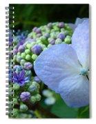 Botanical Garden Blue Hydrangea Flowers Baslee Troutman Spiral Notebook