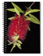 Bottlebrush 1 Spiral Notebook