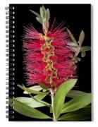 Bottlebrush 5 Spiral Notebook
