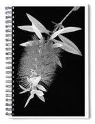 Bottlebrush Trio Spiral Notebook