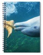 Bottlenose Dolphin Spiral Notebook