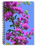 Bougainvillea And Sky Spiral Notebook