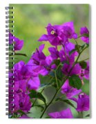 Bougainvillea Morning Spiral Notebook
