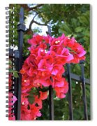 Bougainvillea On Southern Fence Spiral Notebook