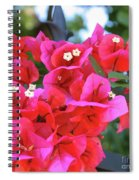 Bougainvillea Square Spiral Notebook