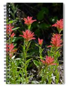 Bouquet Of Paintbrushes Spiral Notebook