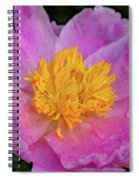 Bowl Of Beauty Peony Catching The Rain Spiral Notebook