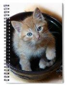 Bowlful Of Kitten Spiral Notebook
