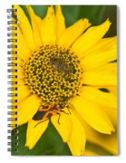 Box Elder Bug On False Sunflower Spiral Notebook