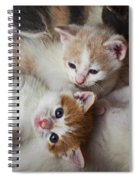 Box Full Of Kittens Spiral Notebook