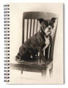 Boxer Sitting On A Chair Spiral Notebook